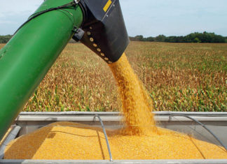 Intervenire sulla PAC per aiutare il mais italiano